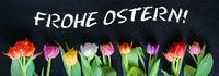 Ostern, Frohe Ostern! Osterkarte mit Tulpen, Banner, Header, Headline, Panorama, Textraum,