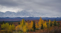 Autumnal Denali National Park Scenery in cloudy day