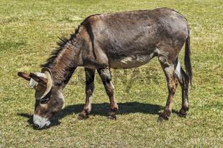 Esel mit Hut   Donkey with hat