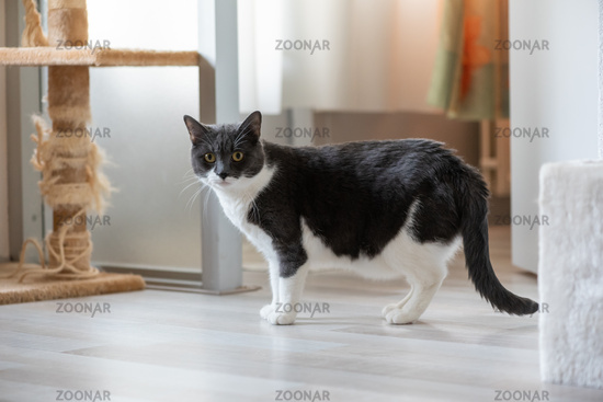 Black and white cat looking at camera