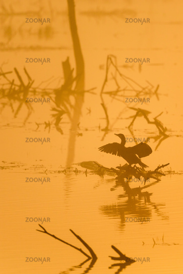 Dawn on the lake with a great cormorants in the fog