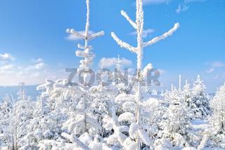weisse Pracht im Winterwald