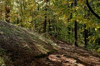 Forest path with leaves in the beech forest, Nuernbeger Land, Fraenkische Alb, Franconia, Bavaria.