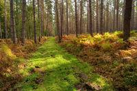 Bog Landscape in  Mecklenburg-Western Pomerania in Germany