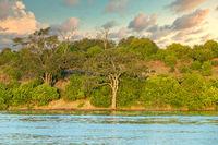 Chobe river landscape Botswana, Africa