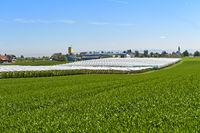 Greenhouse installations for small fruits and berries Sunnehof Beeri, Steinebrunn,Switzerland