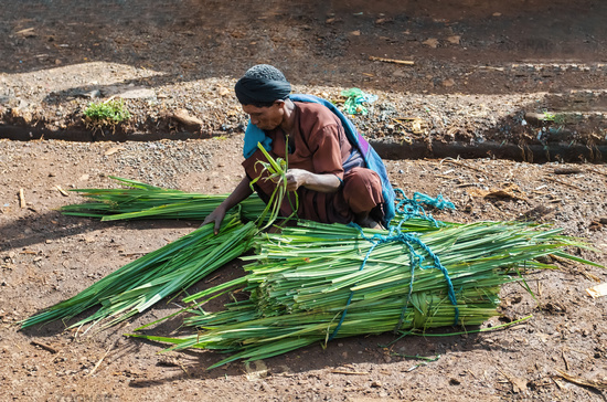 Ethiopian man sells sugar cane on the street