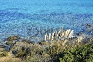 Sardinien La Pelosa