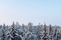 Russian winter forest beautiful landscape