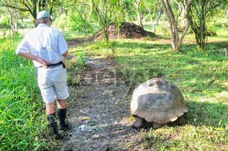 grössenvergleich Schildkröte Mensch