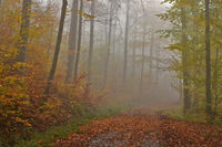 Autumn forest with November fog