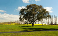 Rural countryside farming fields of Australia in spring