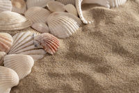 texture, background - close up sea shells and sand with copy space