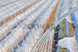 Erdbeeren Schutz vor Frost