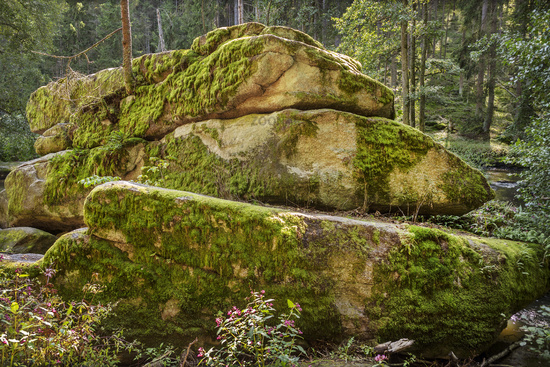 The stones in the forest