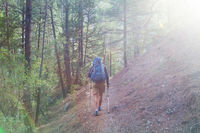 Hike in the forest
