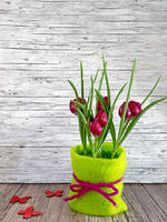 Background spring red tulips on wooden background
