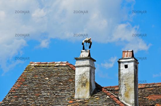 White stork (Ciconia ciconia) standing on smokestack, Rust, Burgenland, Austria