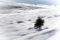 lonely tree in the snow with a little bit of sky