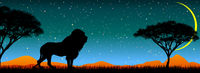 Lion on the background of the night starry sky