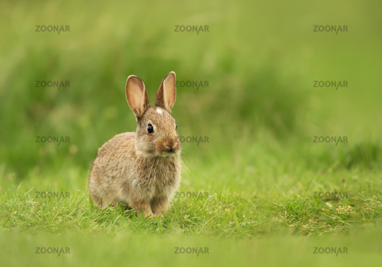 Little bunny sitting in the field of grass