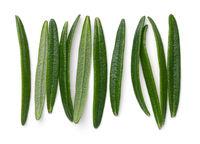 Rosemary Leaves Isolated On White Background