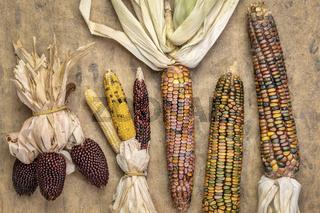 ornamental corn ears abstract