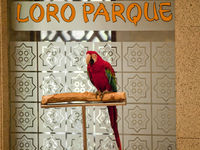 Parrot at loro Parque in Tenerife Canary Islands