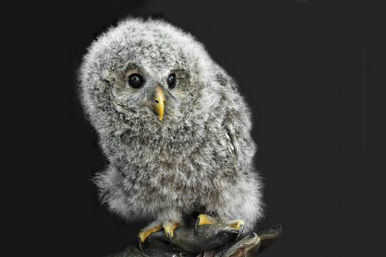 fluffy squab