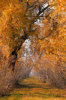 fall colored alley in Hortobagy, Hungary