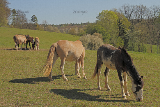 Horses in the paddock