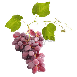 Ripe red grape fruits with leaves