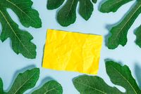 Notepaper placed above plain table between green leaves. Leafage surrounding a notation paper sheet on a soft pastel background.Artistic way of arranging flat lays photography