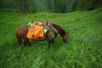 Horse among green grass in nature. Brown horse. Grazing horses in the village