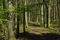 Forest hiking trail on the rampart to the Celtic oppidum Houbirg, Hersbrucker Schweiz, Bavaria