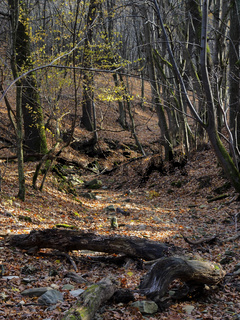 natural forest 2