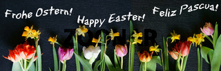 Ostern, Frohe Ostern, Happy Easter, Feliz Pascua, Internationale Ostergrüsse, Banner, Header,