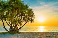 Sunset at tropical beach with palms