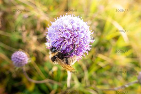 bee on a purple flower