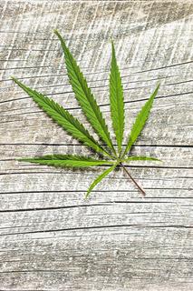 Marijuana cannabis leaf