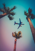Palm Trees With Airplane Overhead