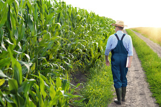Farmer with clipboard inspecting corn at field