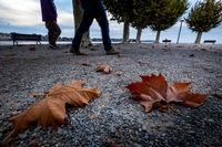 autumn at Lake Bodensee, Konstanz