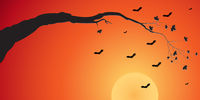 Silhouette of a tree branch and bats at sunset