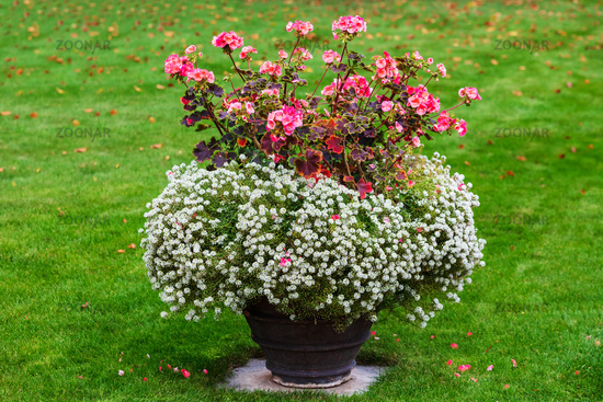 white and red flowers in pot in the park