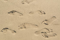 foodprints in the sand