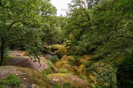 Grüne Wald Landschaft mit Felsen in Huelgoat