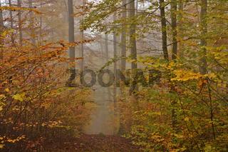 Novembernebel im Herbstwald