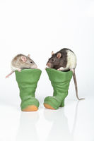 Rats And Boots