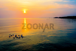 Flock of seagulls floating in the sea at sunset